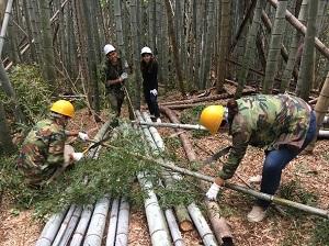 201806_bamboo2.jpg